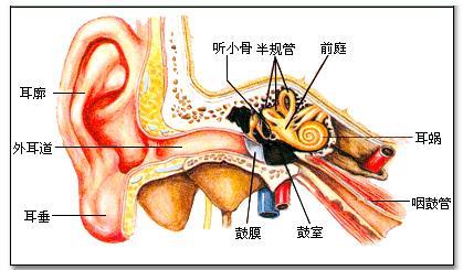 专家教您如何防治慢性化脓性中耳炎