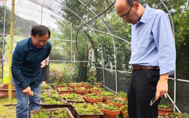 规范管理 科学种植 南阳市推进中药材种植基地规范化建设
